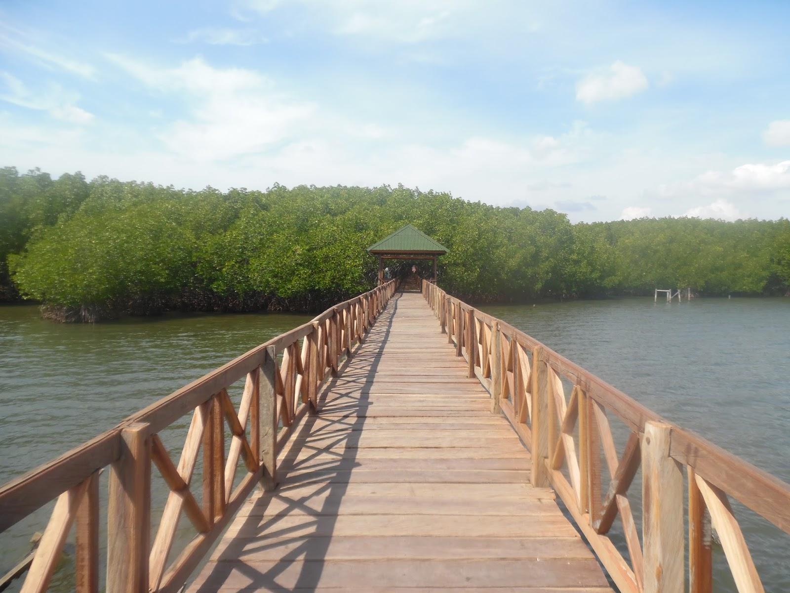 Tempat Wisata Mangrove Ecotourism Centre Pik yang Wajib Dikunjungi